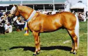 Claredale Champagne Charlie (dec) owned by Goldmine Stud