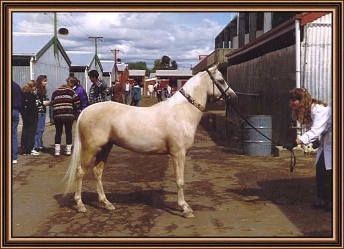 Penndower Peaches - Owned by Carolyne Plunkett